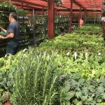 Garden World - NYC Plant Nursery