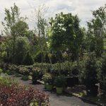 Garden World - NYC Plant Nursery