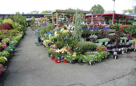 Nyc Plant Nursery Garden World